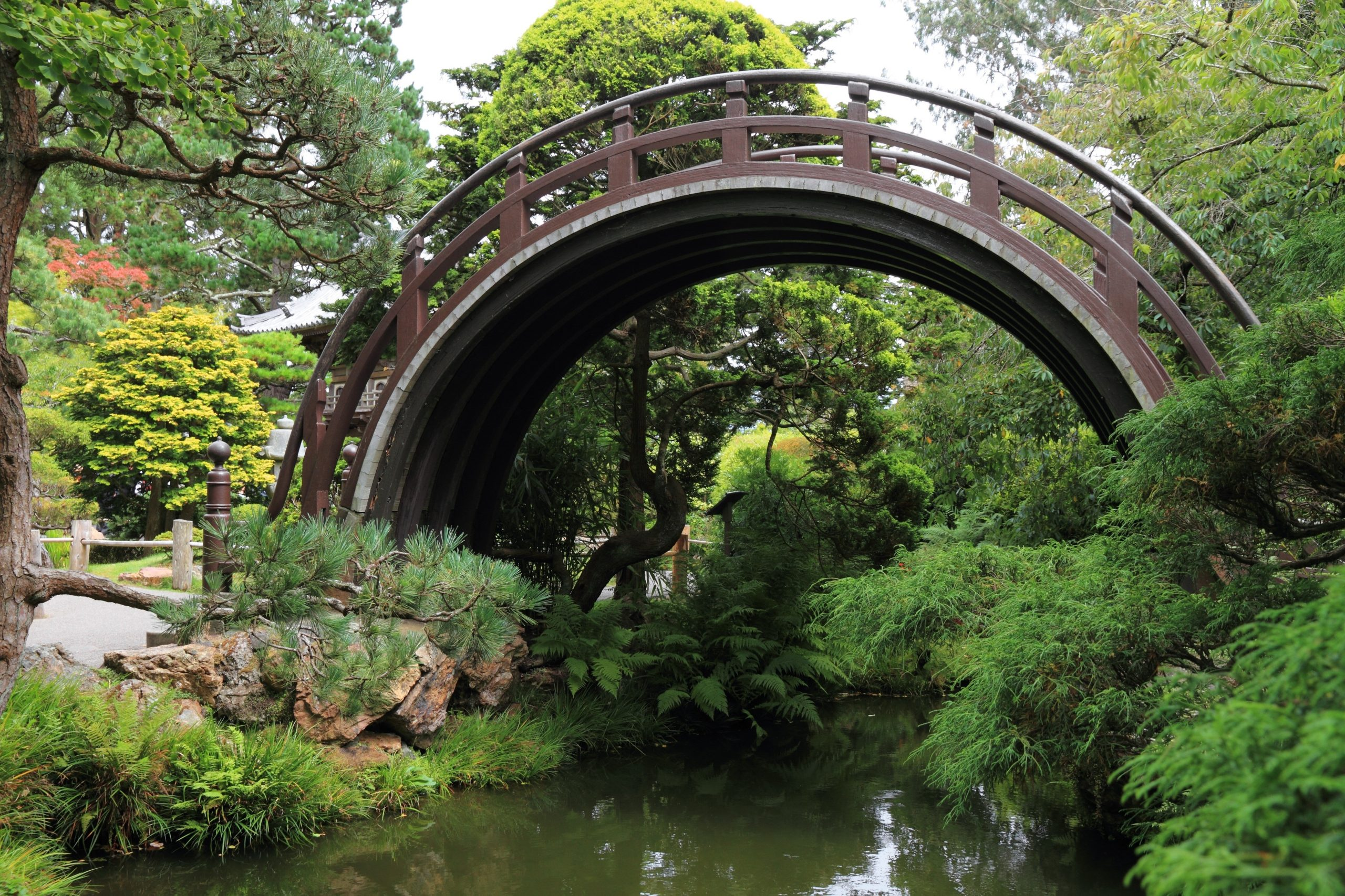 11882830 - arch bridge in an asian garden
